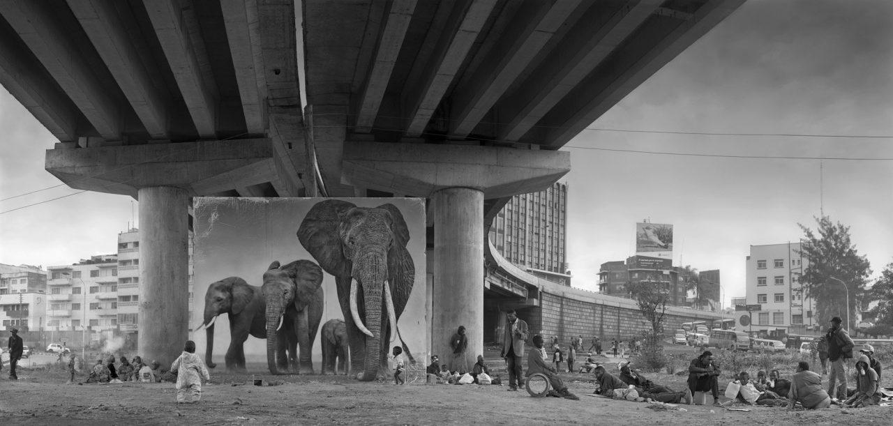 Les animaux de Nick Brandt dans leur environnement perdu. Blog photo Zoom'Up
